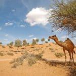 Banyan Tree Al Wadi Resort UAE 6