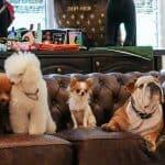 The-Wagington-Singapore-Luxury-Pet-Hotel 2
