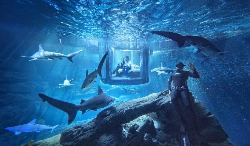 Aquarium de Paris Will Allow You To Sleep With Sharks