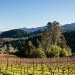 2900-spring-mountain-road- Napa-Valley-7