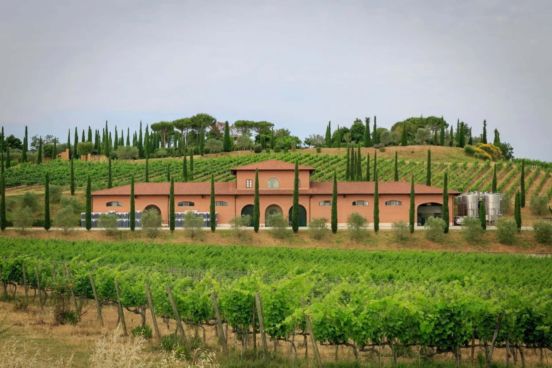 Wine Estate in Tuscany