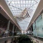 Changi Airport 3