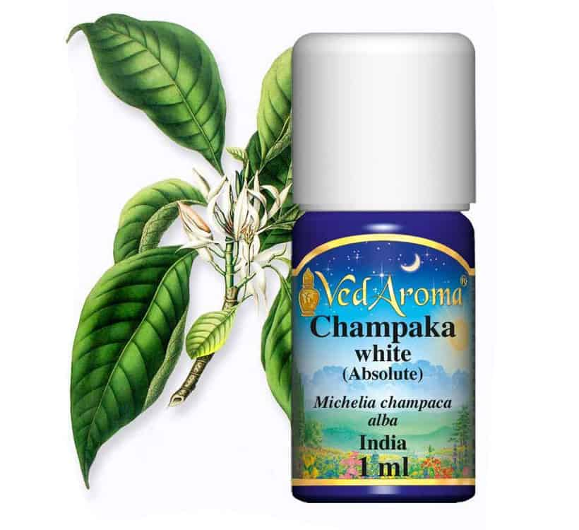 Champaca Absolute Essential Oil