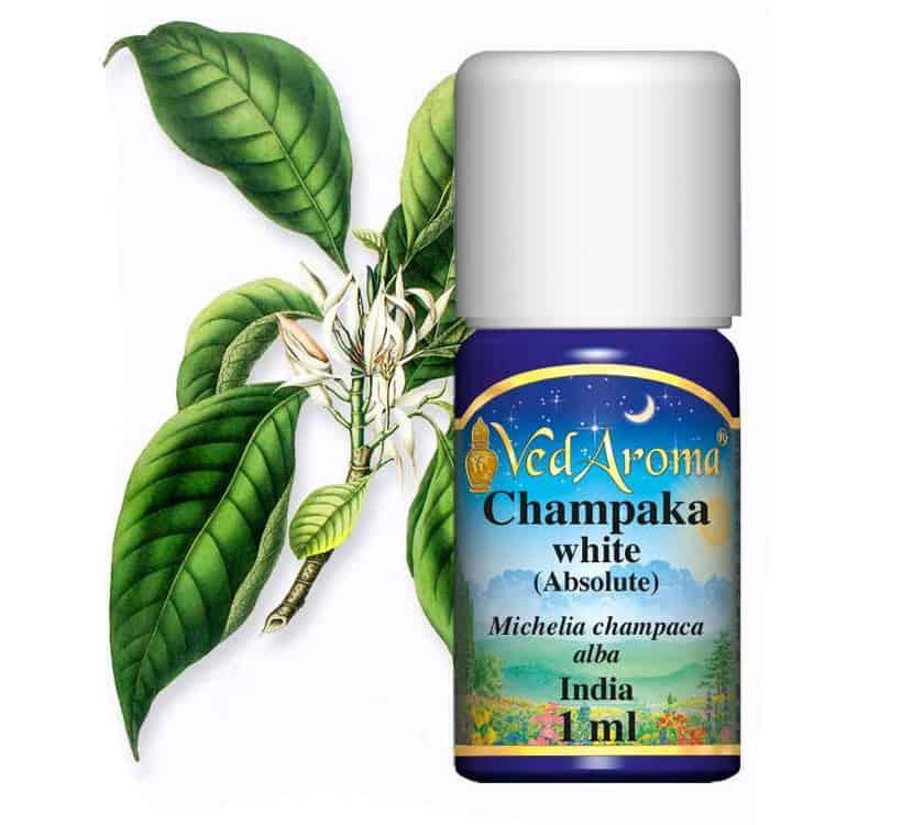 Champaca-Absolute-Essential-Oil