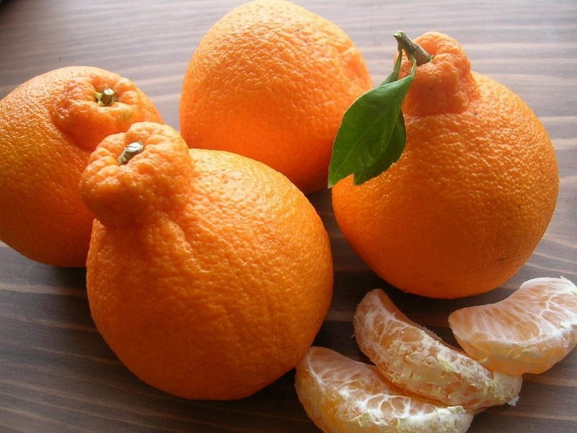 Dekopon Citrus