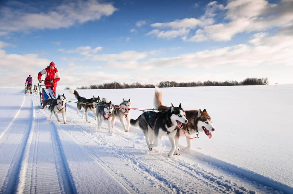 Dog sledding through Sweden