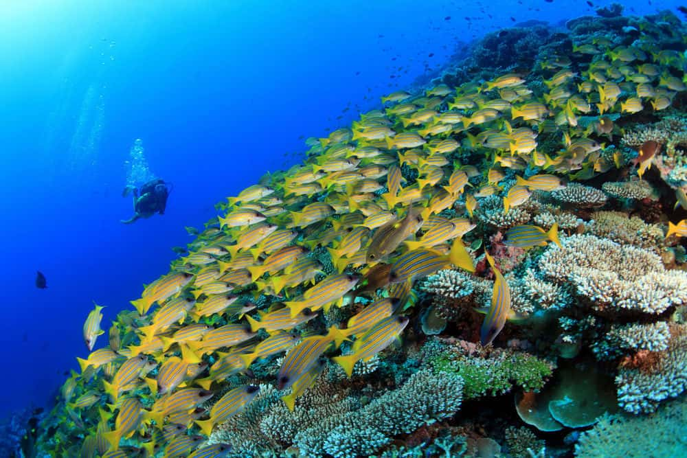 Maldives Reefs
