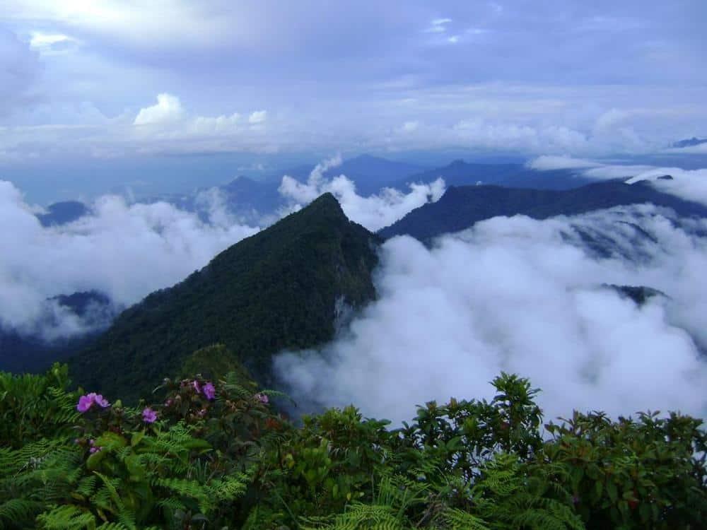Trekking in the Borneo jungle