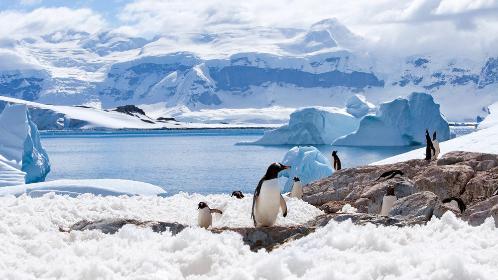 Trek to Antarctica