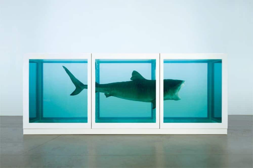 Dead Shark art