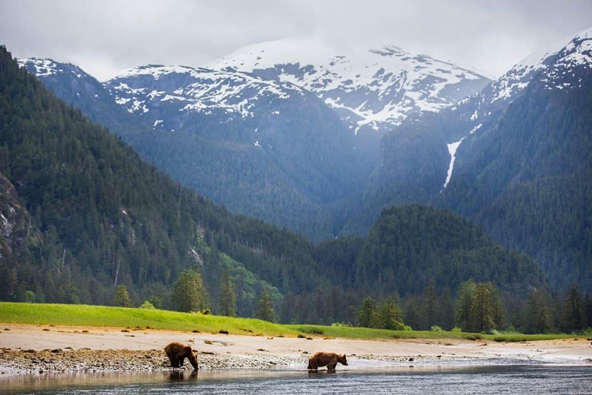 Great Bear Rainforest 3