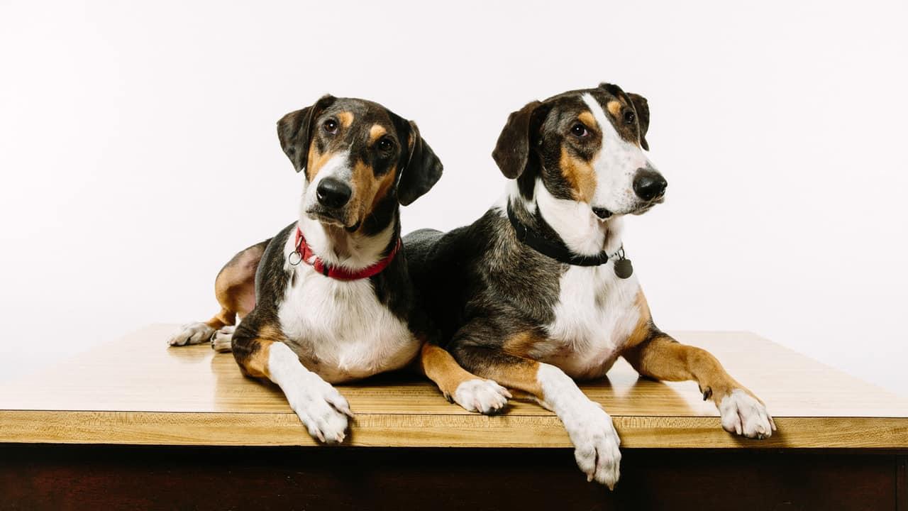dog-cloning-6