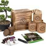 Bonsai Starter Kit