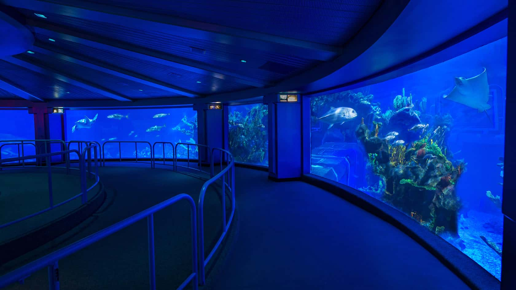 The Seas with Nemo and Friends